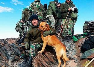 Video: Conocé al perro que fue ascendido a sargento por el Ejercito