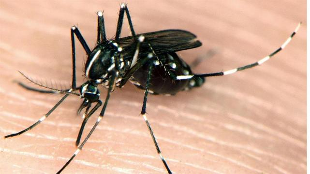 Chikungunya:La alerta que llega con las lluvias